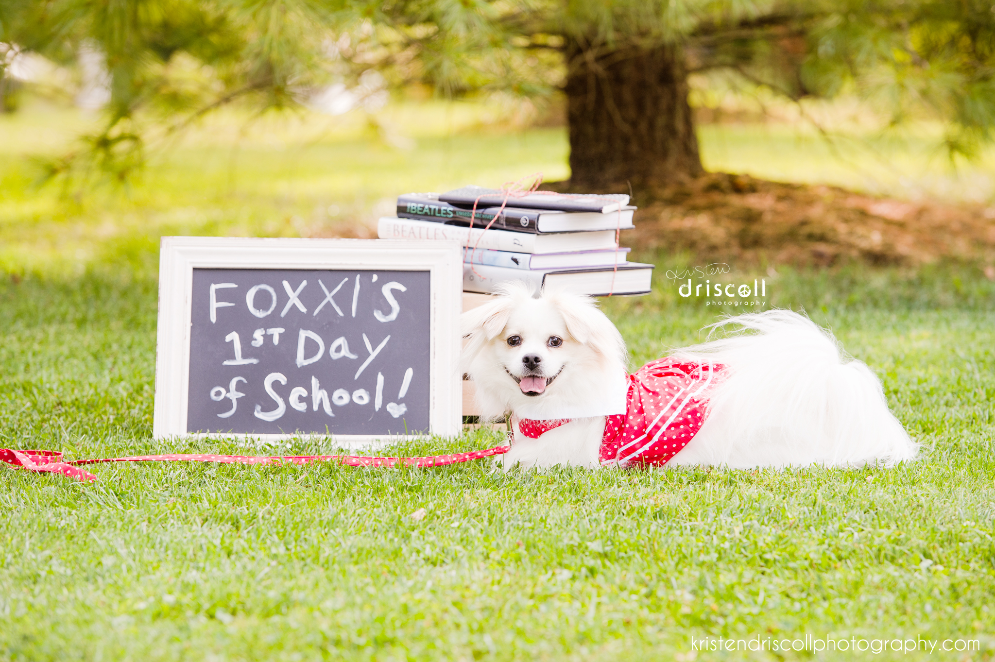kristen driscoll photography nj photographer pet photography